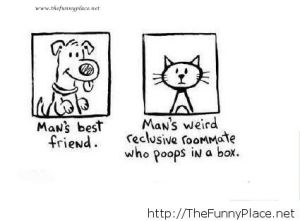 Cat-vs-dog-best-friends