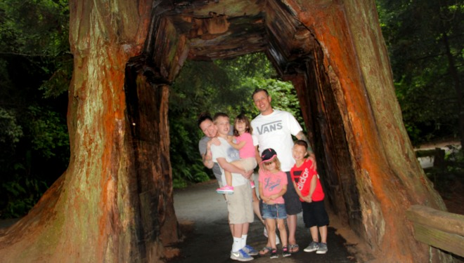 family vacation tree redwoods summer