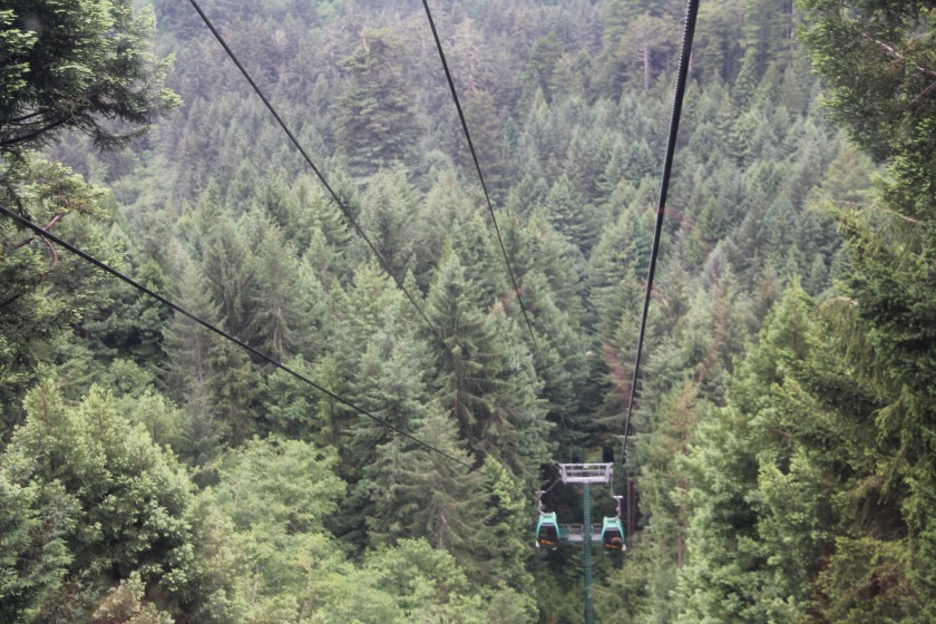 trees mystery adventure California redwoods forest family vacation sky tram