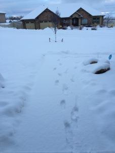 weekly updates blogging snow winter2016