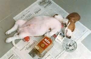 drunk fitness health Super Bowl 50
