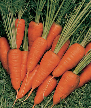 carrots skin care healthy eating habits